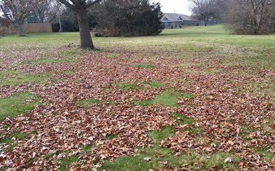 Leaf Removal and Property Clean Ups.